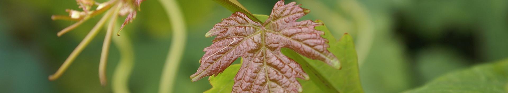 iata - resistencia plantas