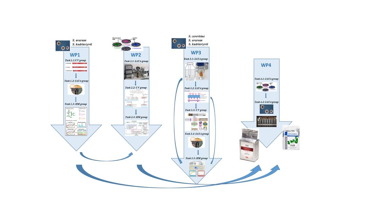 Proyecto coordinado: Modelización multiescalar de datos ómicos para la obtención de levaduras híbridas de Saccharomyces de interés en enología (MULTIWINE)