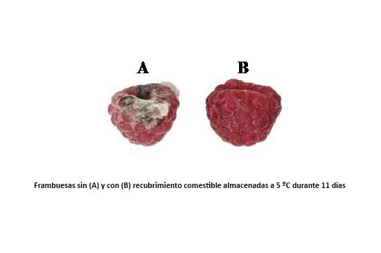 Frambuesas sin (A) y con (B) recubrimiento comestible almacenadas a 5 ºC durante 11 días.